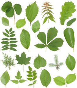 Herbarium bilder